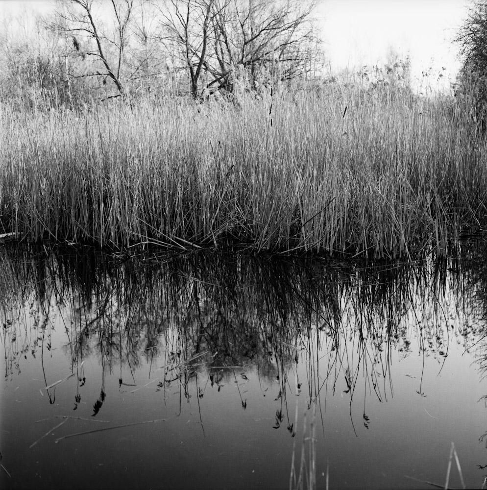 Amager Fælled 2 © Alastair Wiper
