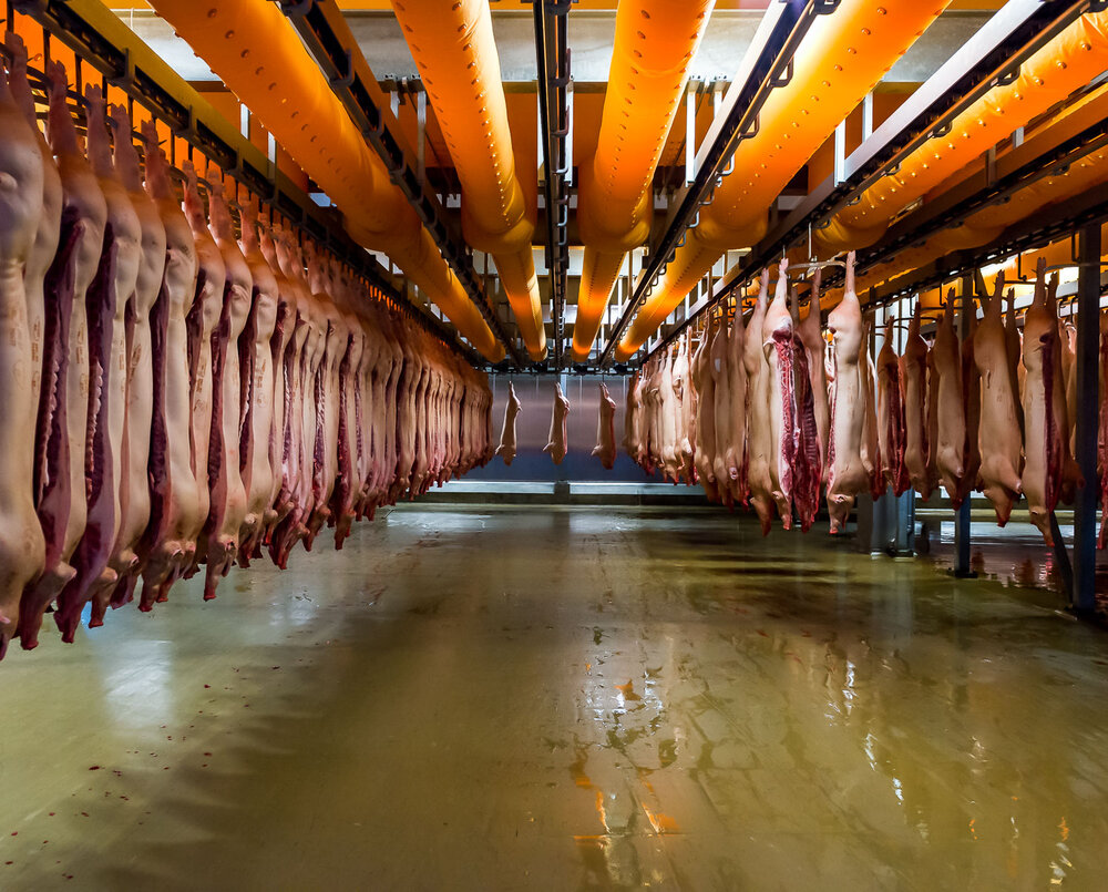 Danish Crown slaughterhouse, Horsens, Denmark