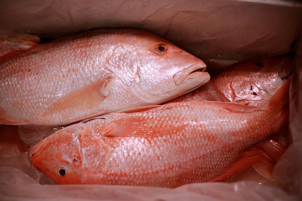 FISH-10.jpg