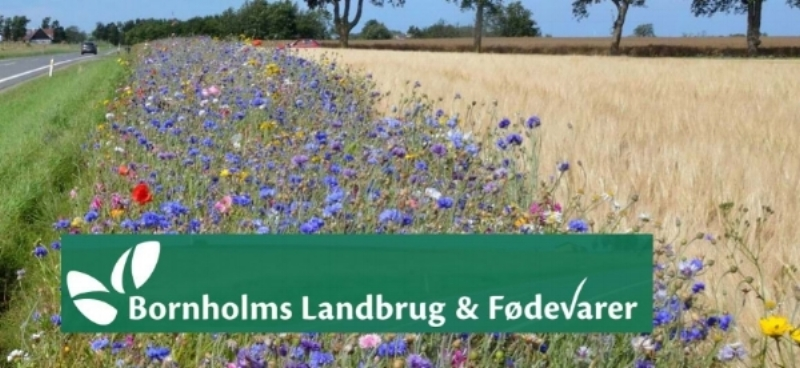 Habeetats and National farmers and food producers association (Landbrug & foedevarer) ongoing drive to create more than 42 km of perennial flower and pollinator strips for campaign in Bornholm.
