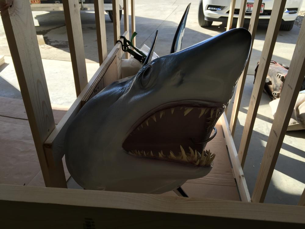 Shark!.JPG