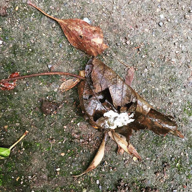 #fallenleaves #fallen bird