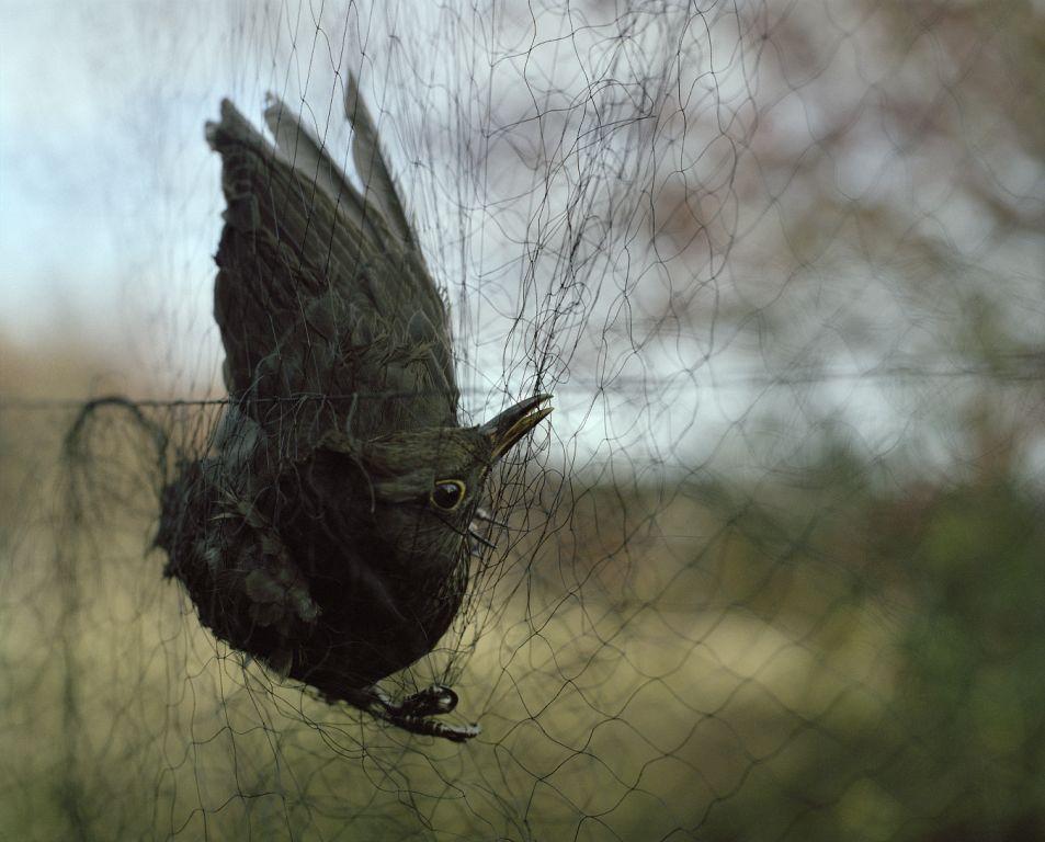 Bird #1, 2008
