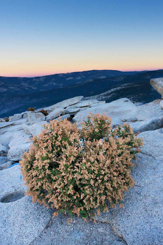 2010.07.30_Yosemite-45.jpg
