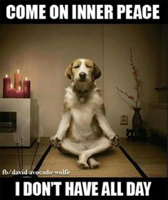 0f5df53d6a21fdde4c71438ae40cbc8e--yoga-dog-adorable-animals.jpg