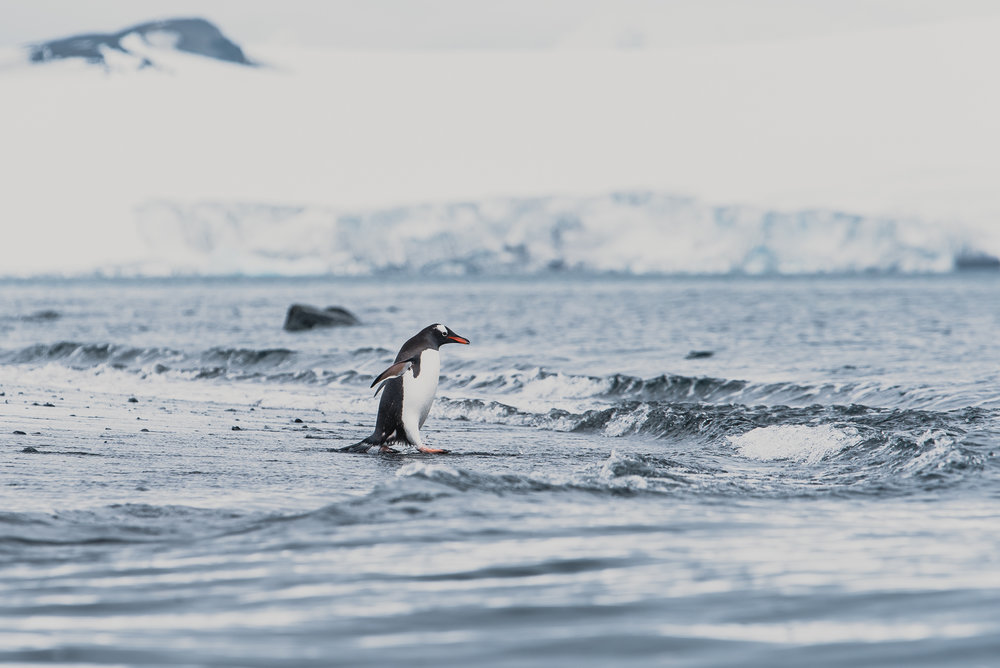 joe-thomas-photo-antarctica-travel-new-york-photographer-1.jpg