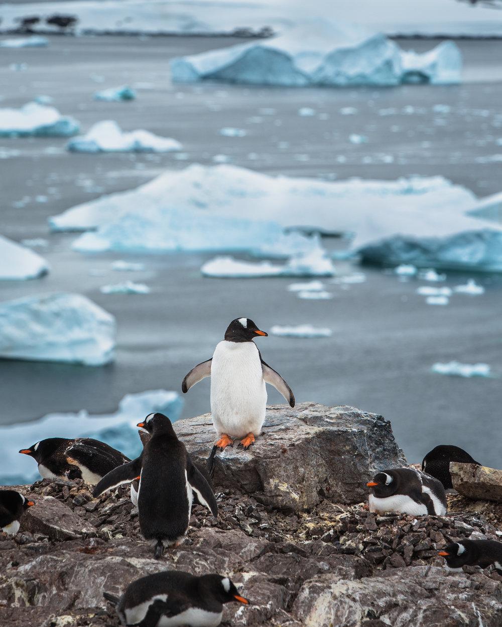 joe-thomas-photo-antarctica-travel-new-york-photographer-18.jpg