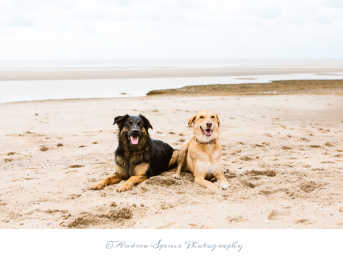 Andrea Spence Photography  (Cape Cod area): mention BFTD  and get a beach dog shoot for  $275.00 for a 30-minute shoot (that's  $50 off  a dog package+ 3 extra photos!)