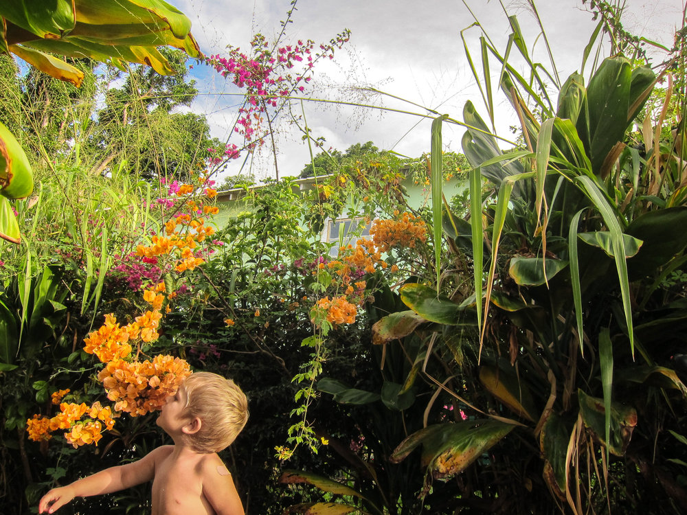 Molly Rees Photo - Documentary Childhood Photography - Portrait of boy smelling orange tropical flowers on Big Island, Hawaii by M. Menschel