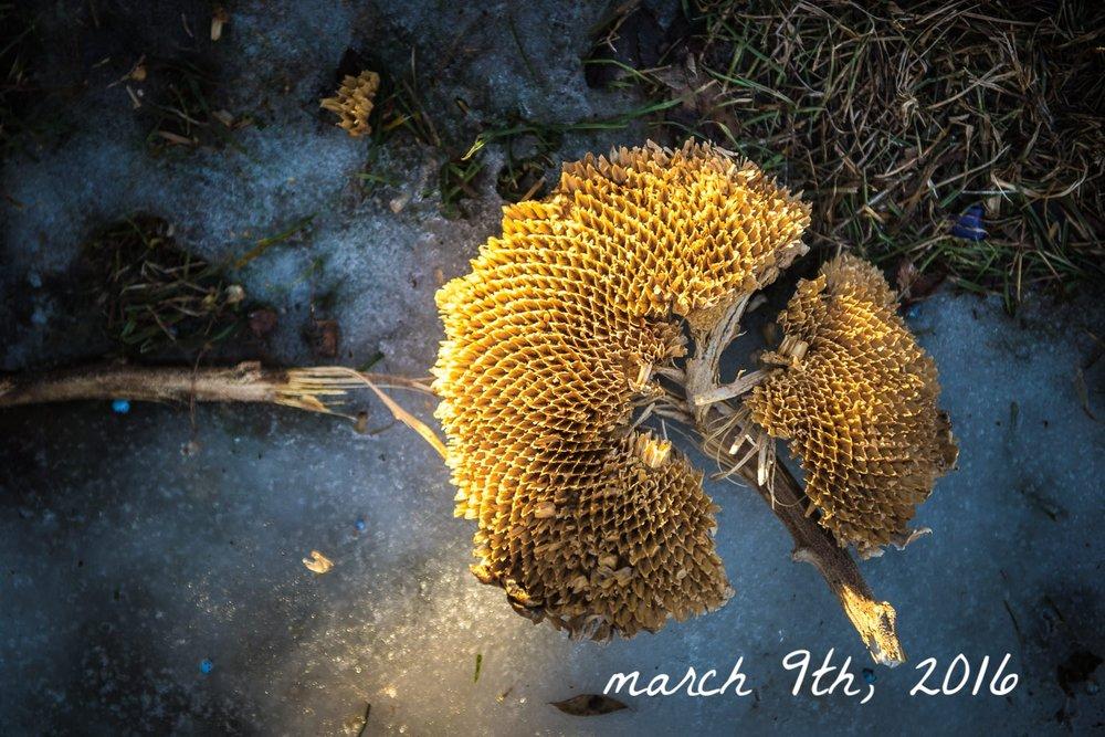 Gratitude Blog - March 9th, 2016