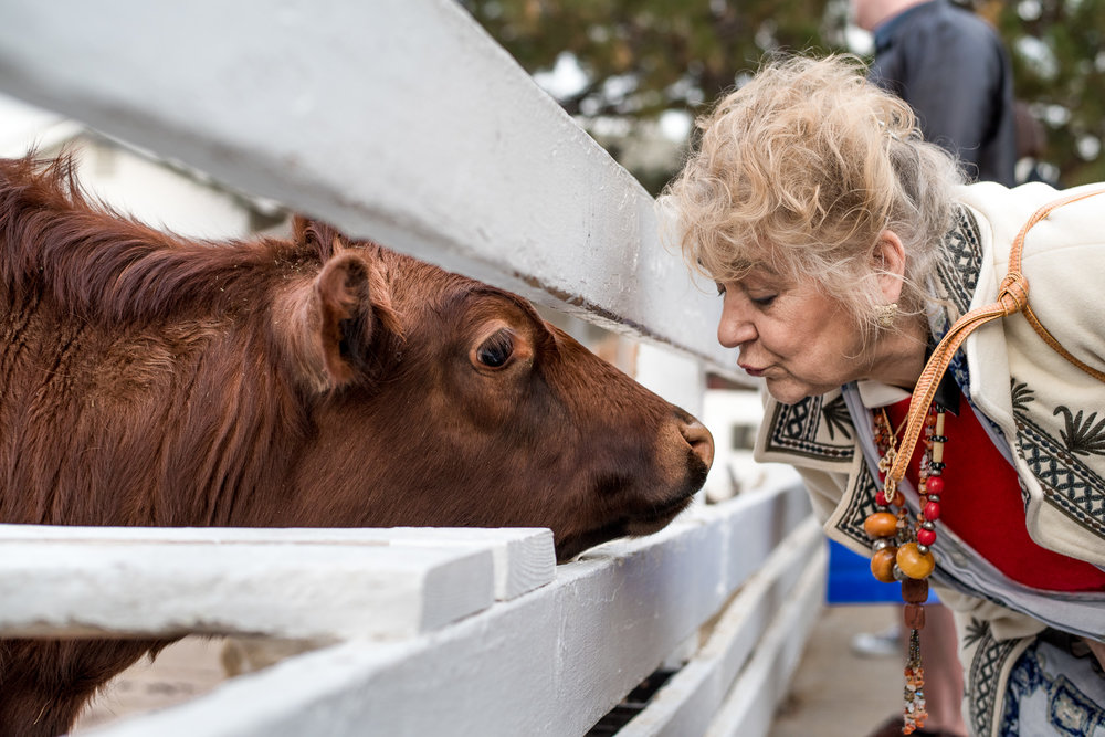 Molly Rees Photo - Documentary Family Photography in Denver, Colorado - grandmother kissing cow