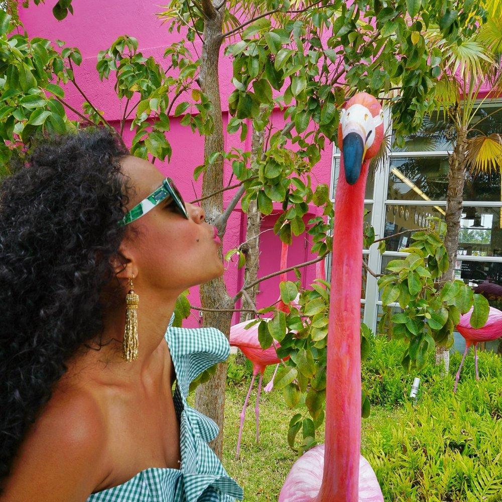 flamingo 1.jpeg
