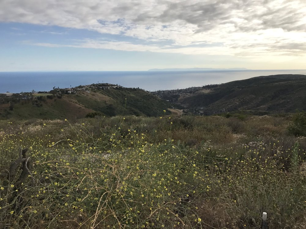 This is one of our favorite hikes: Top of the World in Laguna Beach, CA