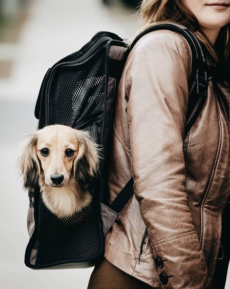 A doxie in a backpack...