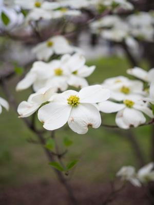 White Flowers- 2.jpg