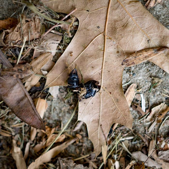 Beetle_Death (1 of 1).jpg