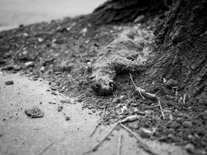 Squirrel_Death (1 of 1).jpg