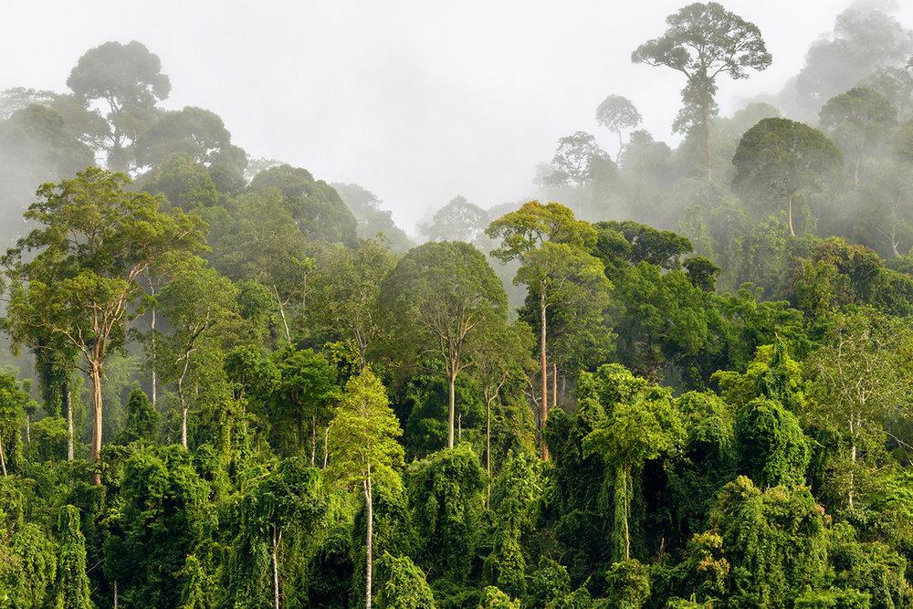 Forest Endangered