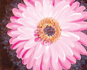 pink_gerbera_daisy.jpg