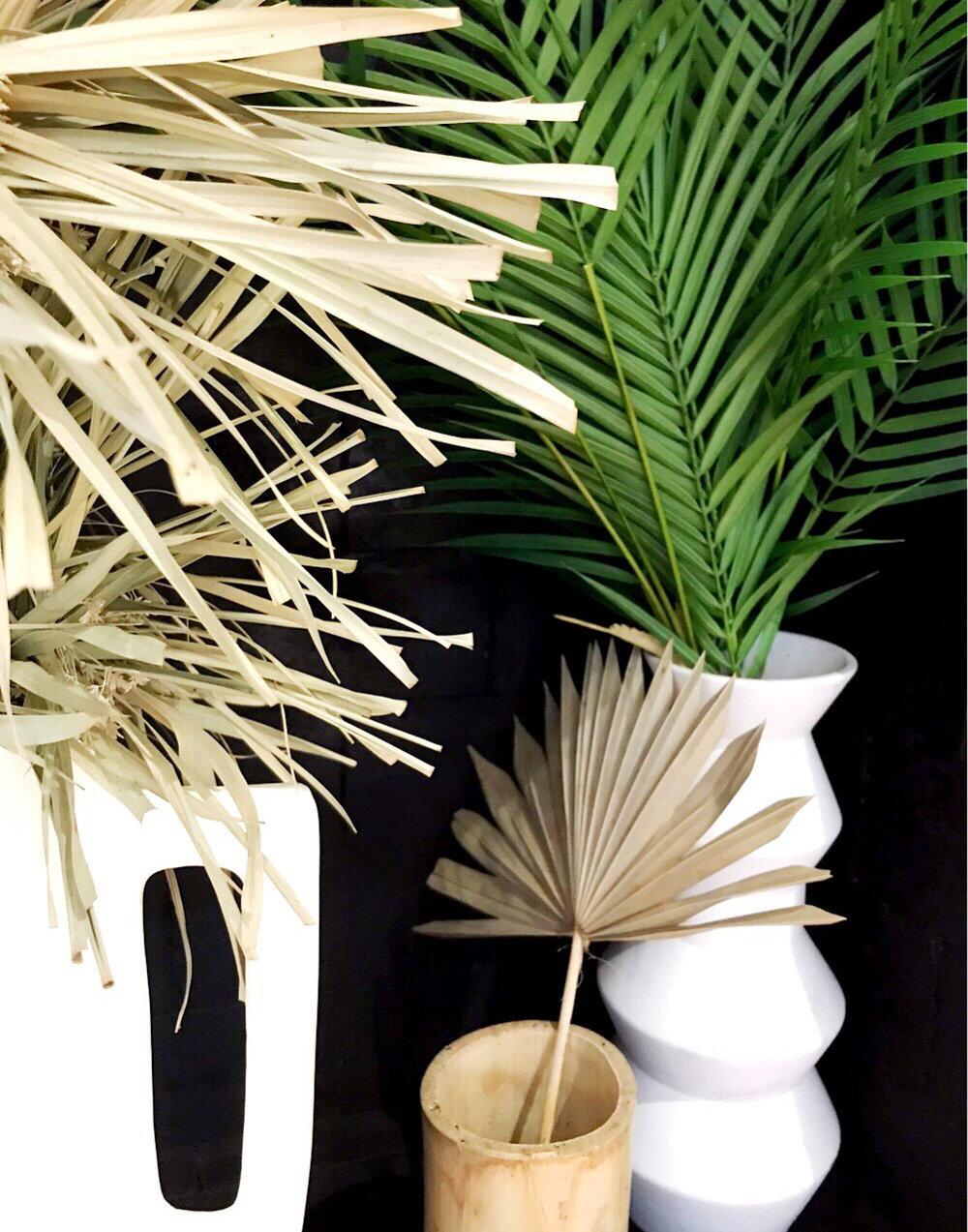 plants2.jpg