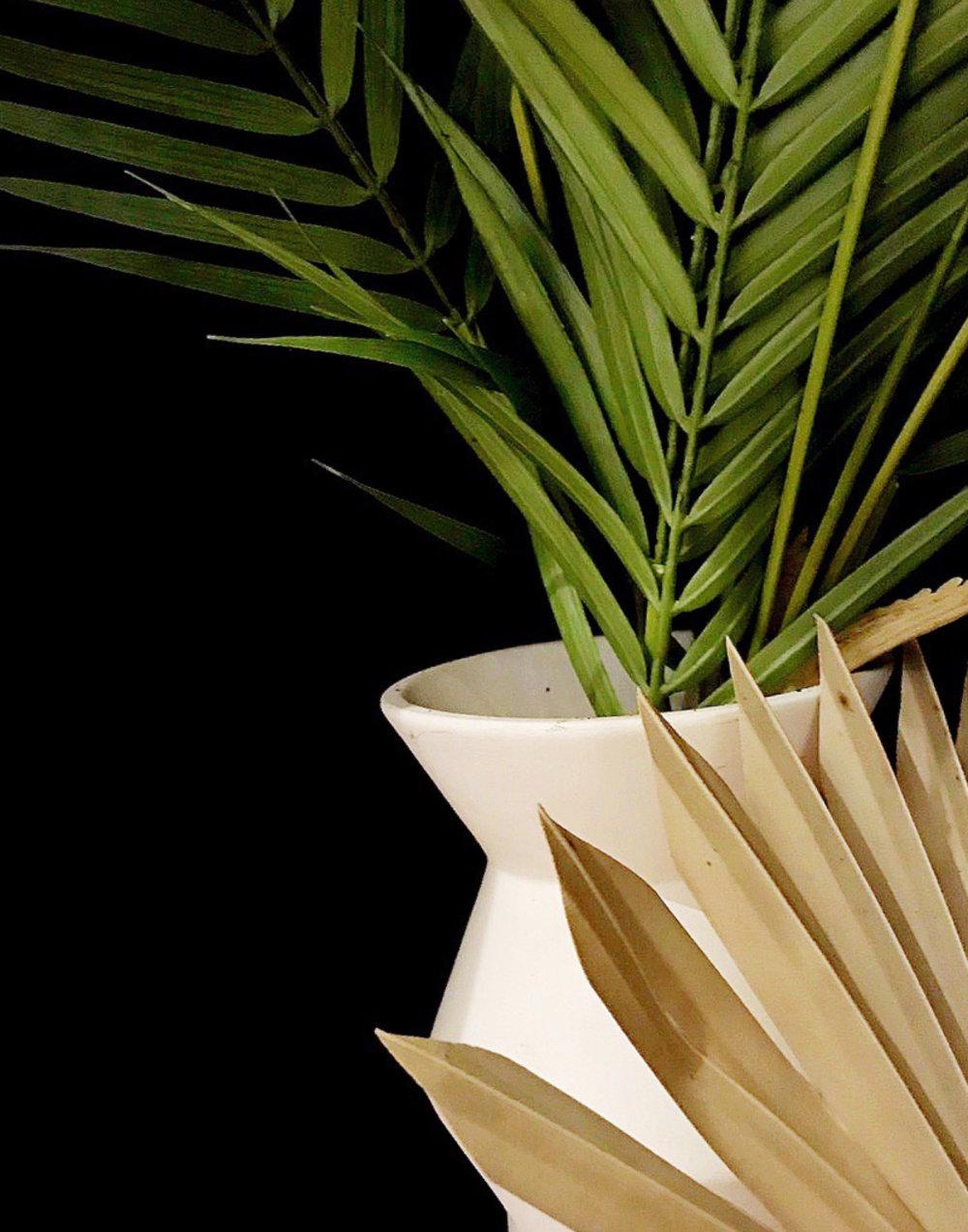 plantttts.jpg