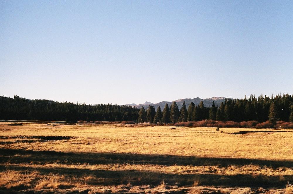 Tuolumne Meadows. California.