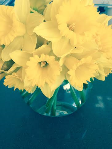 Yellow Daffodils. Warning! Daffodils can be toxic to children or animals if ingested and can cause an allergic reaction to those who are allergy prone.