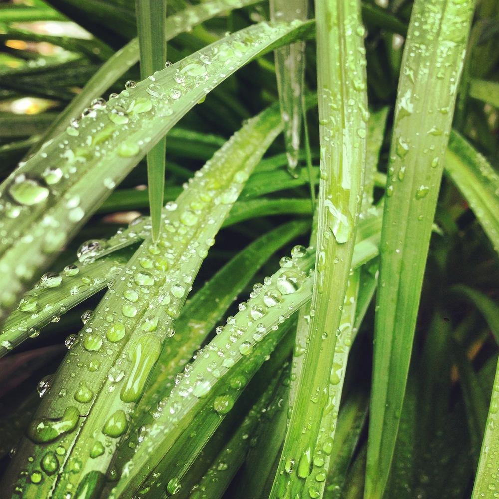Berkshire Dew