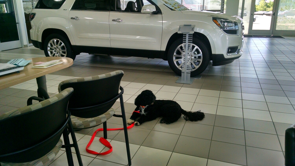 Gabby....car shopping!!