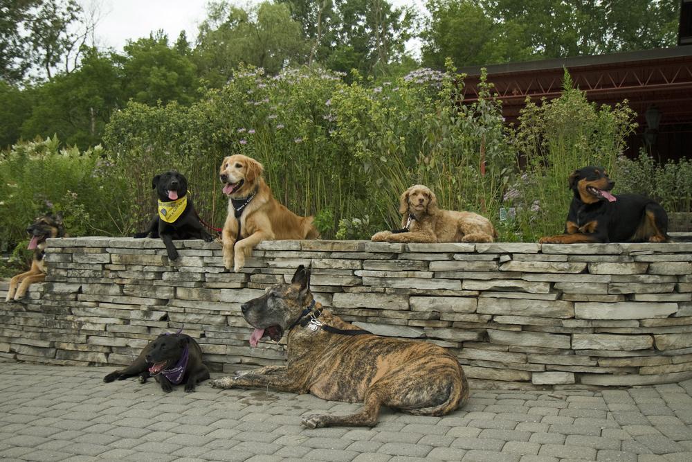 dogs 2-18-14.jpg