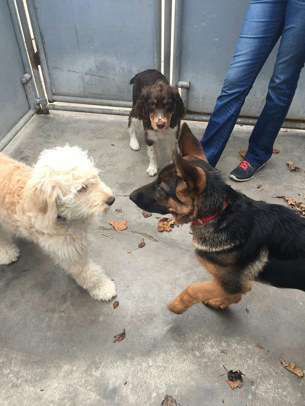 Jax, Cooper and Levi...