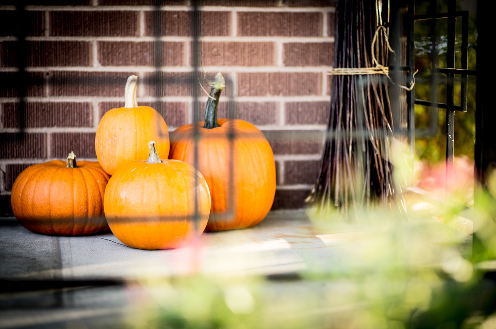 Fall Pumpkins by Gabe Brownell