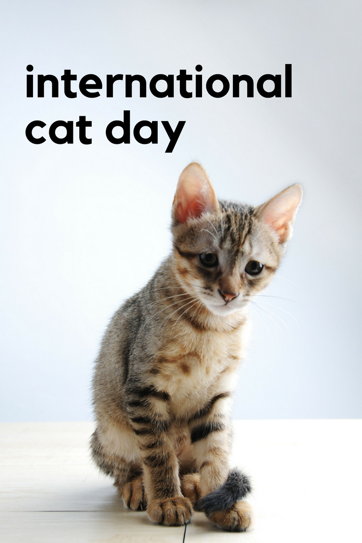 Happy International Cat Day!