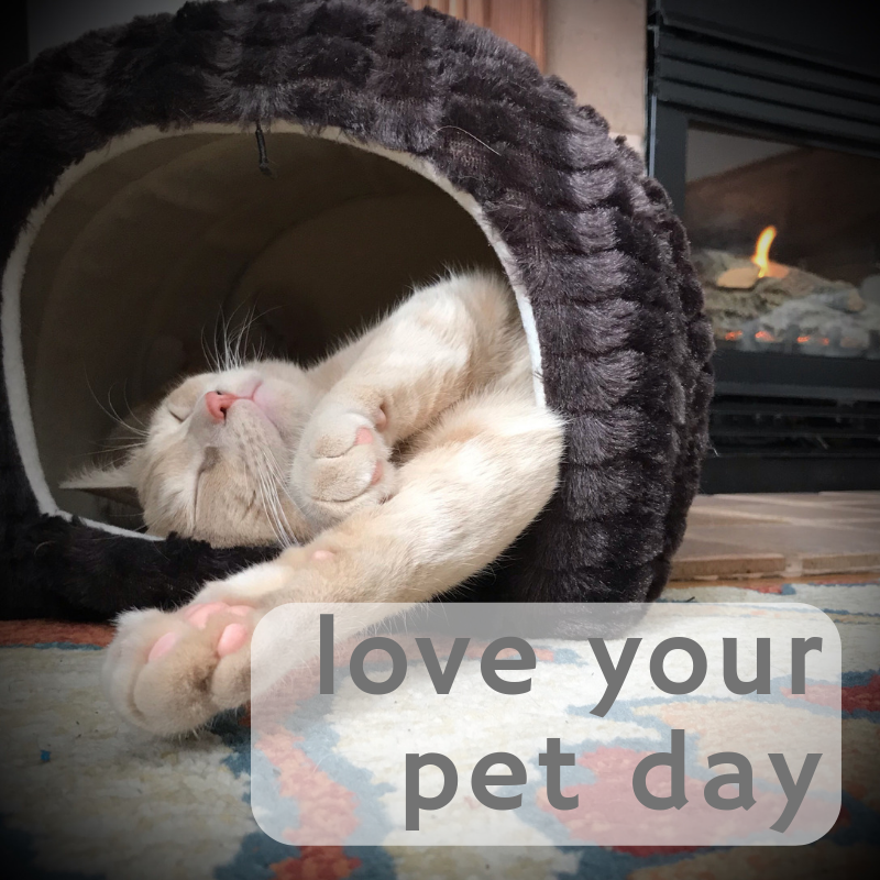 Today is Love Your Pet Day