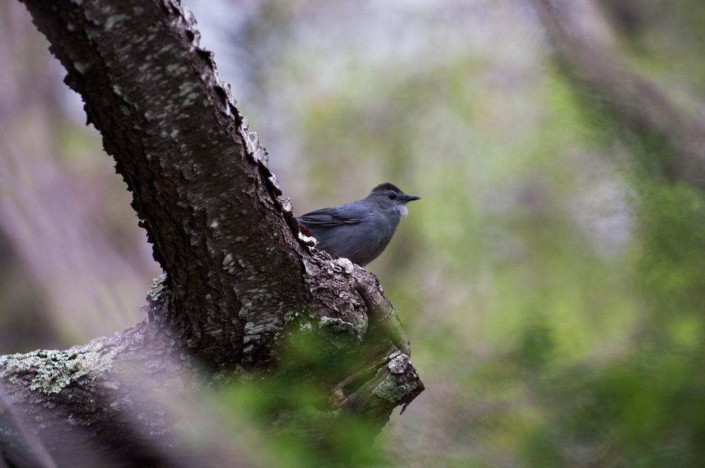 Bird Watching (85 of 152).jpg