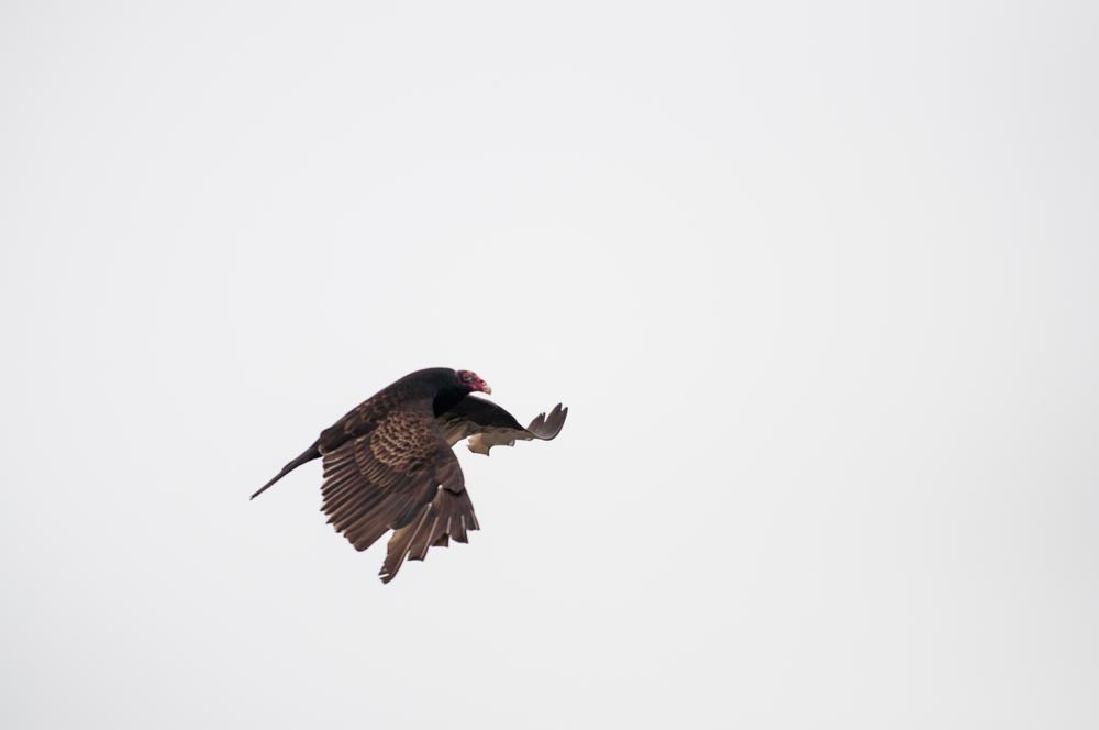 Bird Watching (148 of 152).jpg