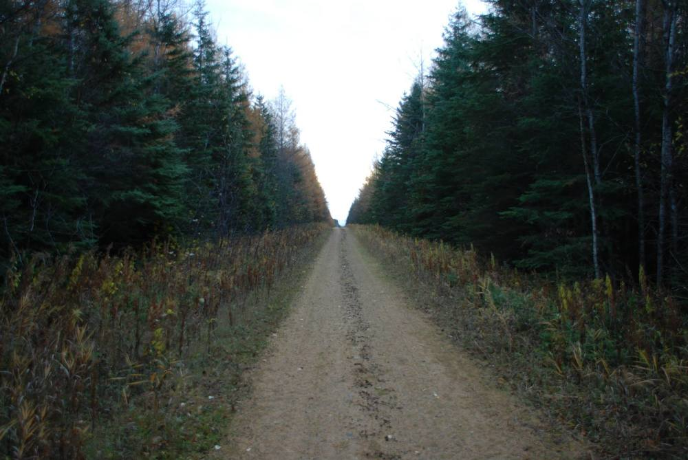 The next morning, I head back to the vehicle. This is the stretch of path where I see the first wolf...