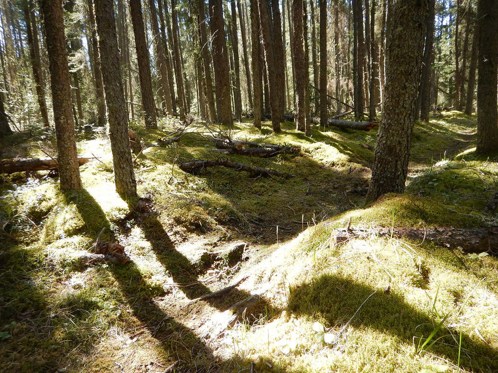 Steeprock portage trail