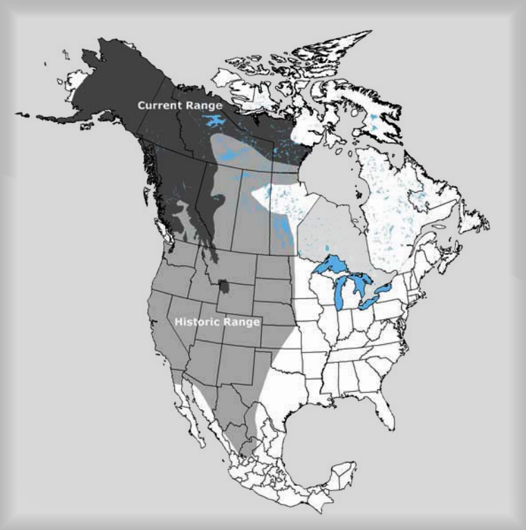 Grizzly bear range in North America (adapted from Mattson et al. 1995, McLellan 1998, Kansas 2002, Ross 2002, and Hamilton et al. 2004; prepared by Environment Canada 2008).