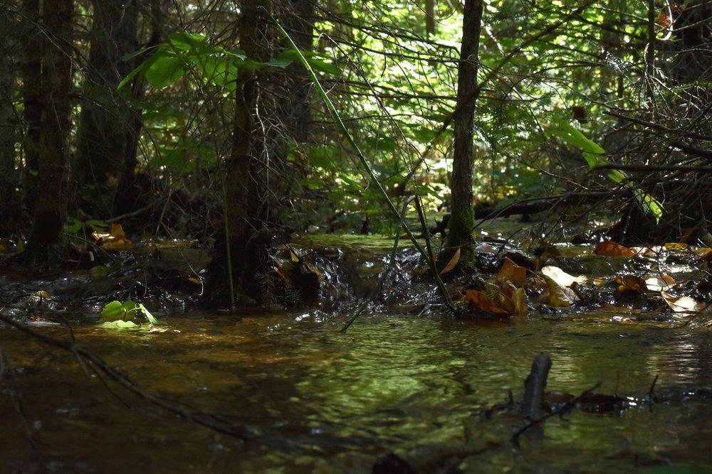 Micro waterfall (Hootz)