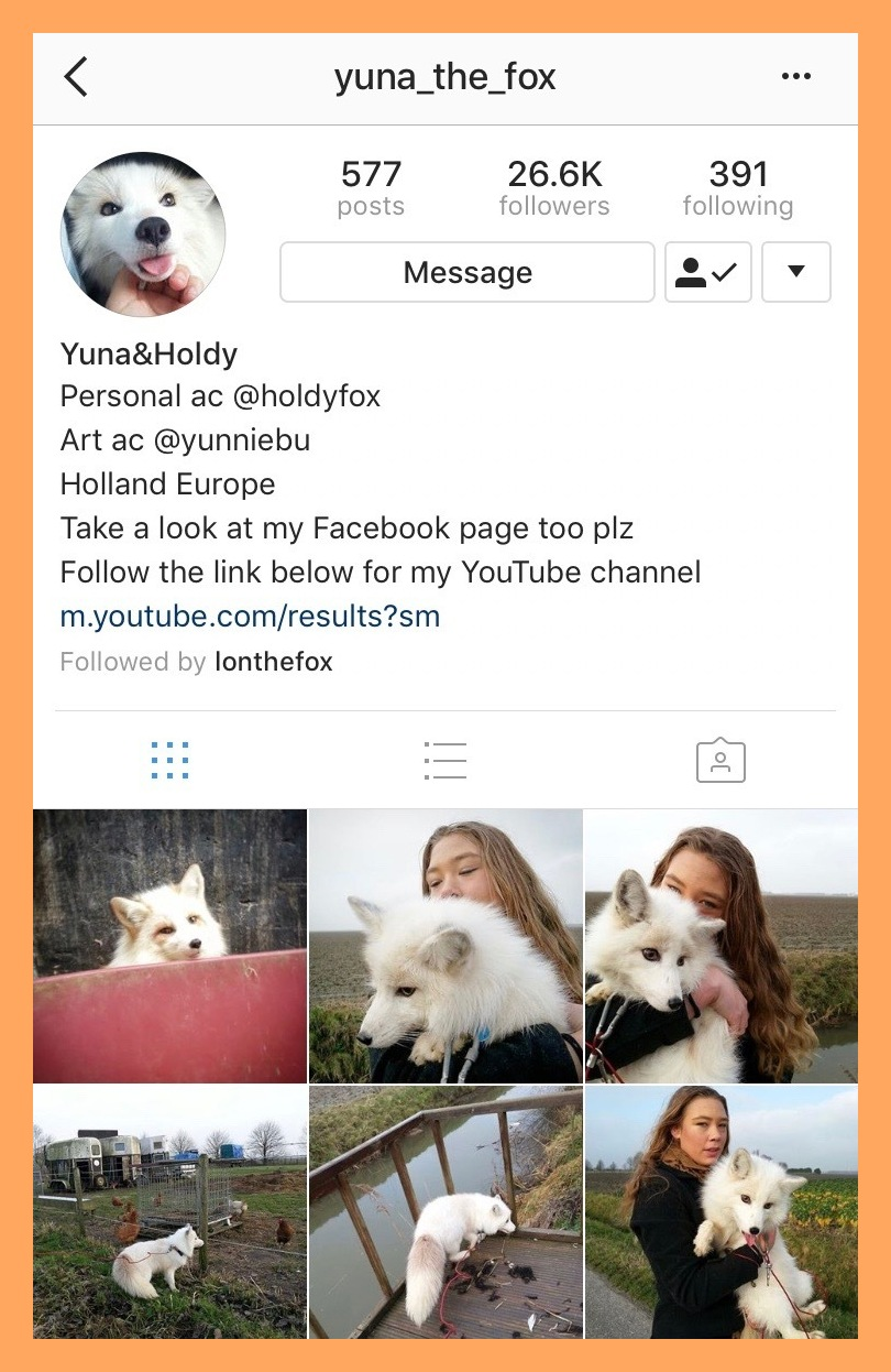 @yuna_the_fox - Yuna is a furry white fox who lives in Holland! We wish we lived closer so we could visit. 😩 Oh the agony. You can keep up to date with her day to day activities through her Instagram and Youtube Channel.