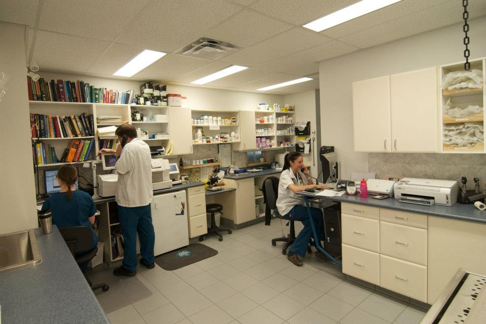 Our in-house laboratory equipment allows us to analyze blood and urine samples quickly.