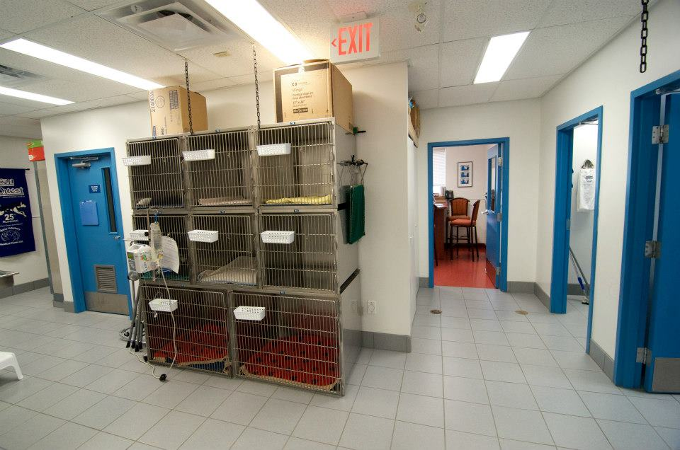 Our ICU kennels allow us to monitor critically ill patients and patients recovering from surgery.