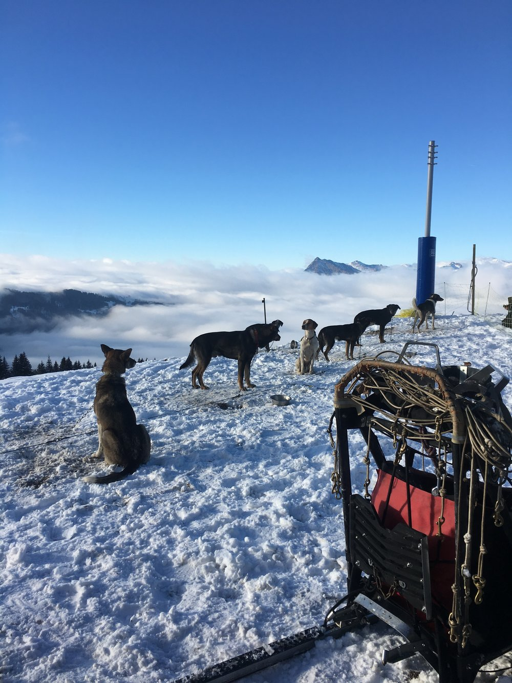 Dog team hanging out above the clouds of Grand Massif.