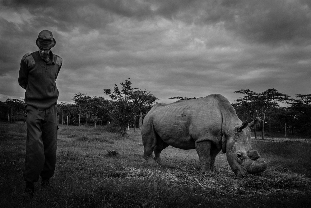 Rhino handler, Esogon, with the last Northern white rhino on earth.
