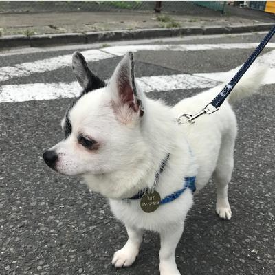 Walking Dogs in Tokyo