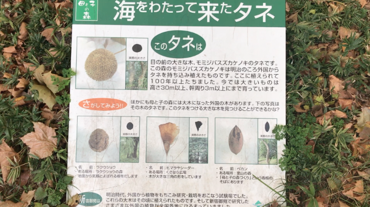 Tree identification activity at Mother and Child Forest, Shinjuku Gyoen