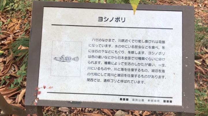 Yoshinobori, or goby, bottom-dwelling fish at Shinjuku Gyoen, Mother and Child Forest