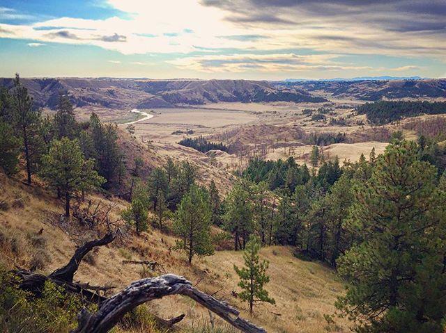 My current view! #Montana #elk