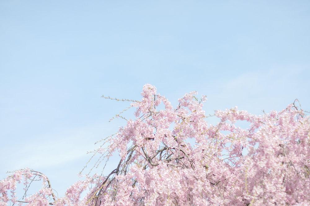 DSC_1150-3.jpg
